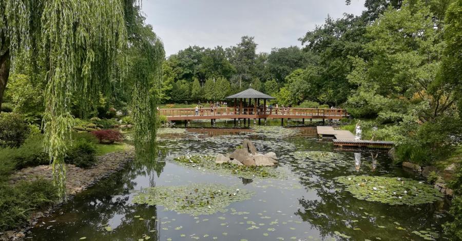 Ogród Japoński, Mirielka