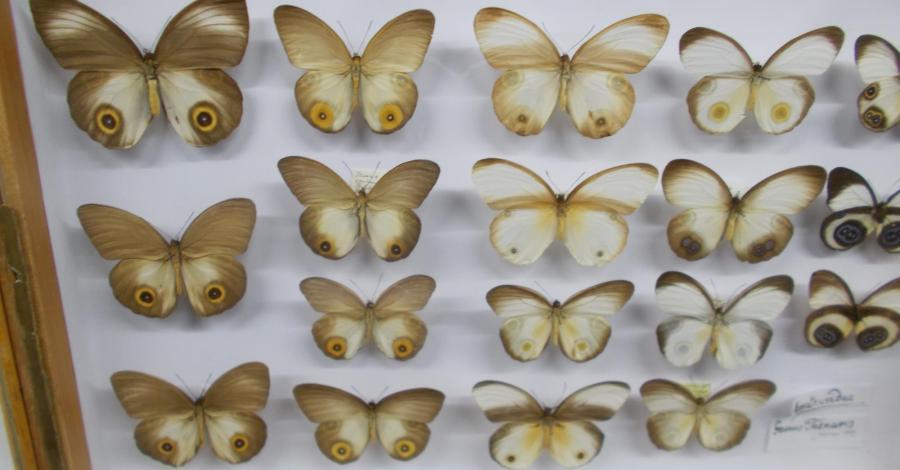Muzeum Motyli w Bochni - zdjęcie
