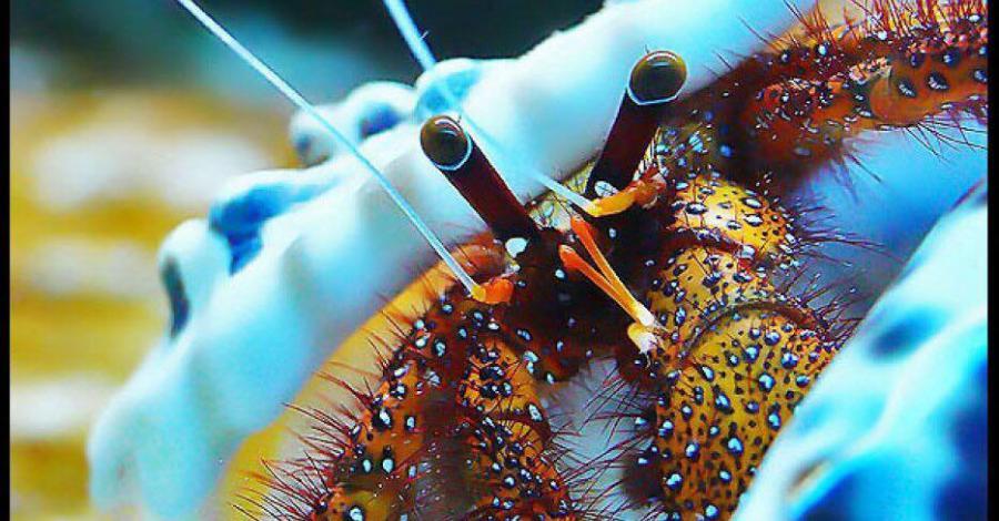 Oceanarium w Pobierowie - zdjęcie