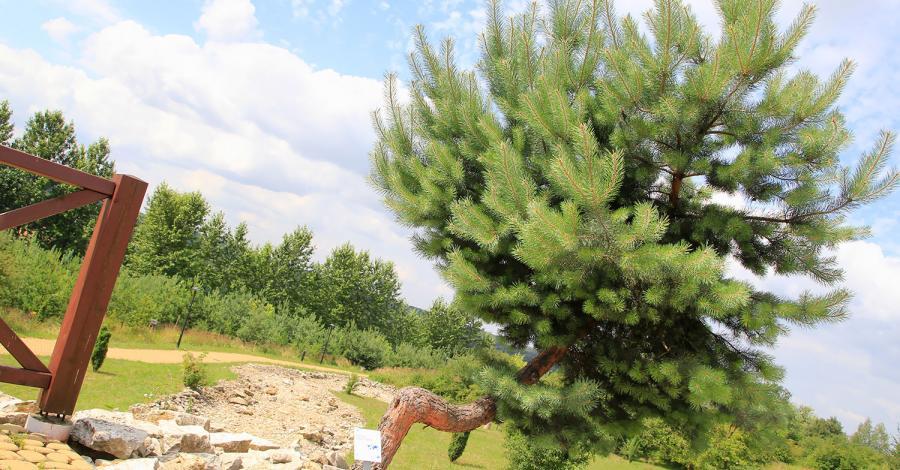 Śląski Ogród Botaniczny w Mikołowie - zdjęcie