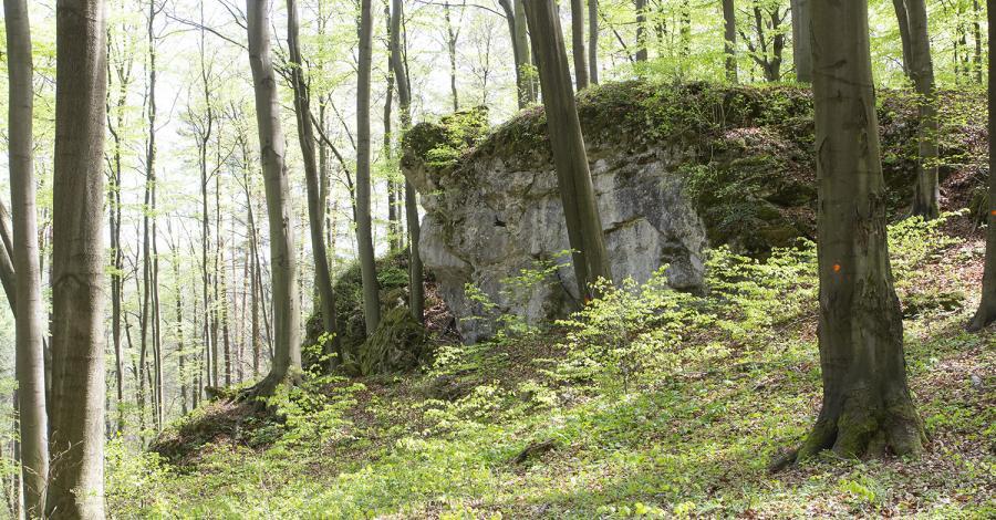 Rezerwat Ostrężnik na Jurze - zdjęcie
