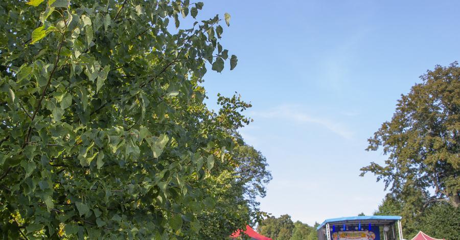Aleja Lipowa w Choroniu - zdjęcie