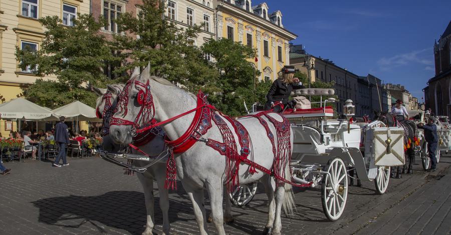 Dorożki w Krakowie - zdjęcie