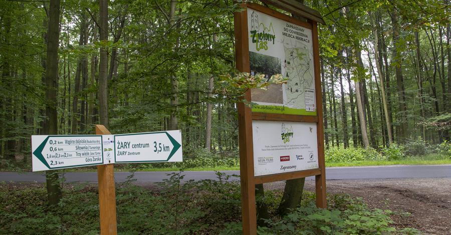 Zielony Las w Żarach - zdjęcie