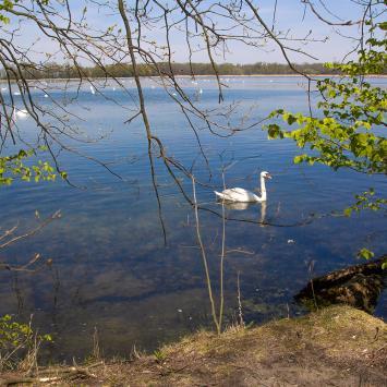 Rezerwat Łężczok w Raciborzu