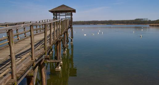 Na majowy spacer do Rezerwatu Łężczok czyli z kamerą wśród ptaków :) - zdjęcie