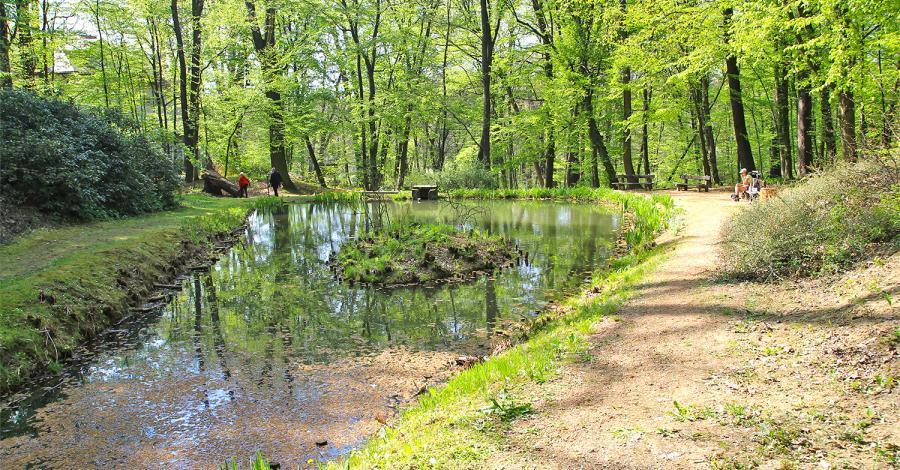 Arboretum Bramy Morawskiej w Raciborzu - zdjęcie