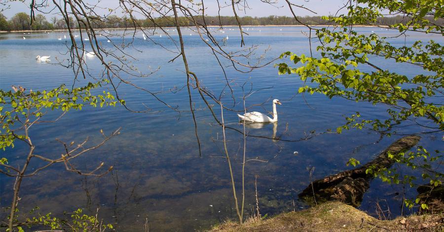 Rezerwat Łężczok w Raciborzu - zdjęcie