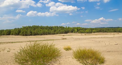 Planujesz wyjazd na Pustynię Błędowską? Zobacz najlepsze punkty widokowe! - zdjęcie