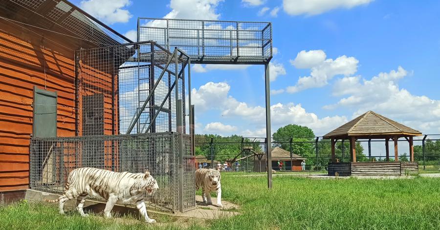 Zoo Safari Borysew - zdjęcie