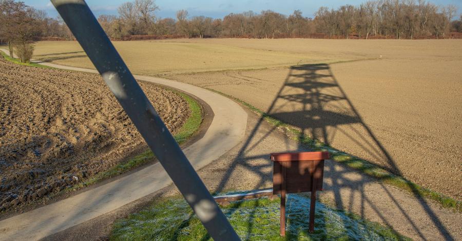 Wieża widokowa na meandrach Odry w Zabełkowie - zdjęcie