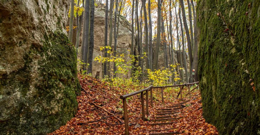 Rezerwat Pazurek na Jurze - zdjęcie