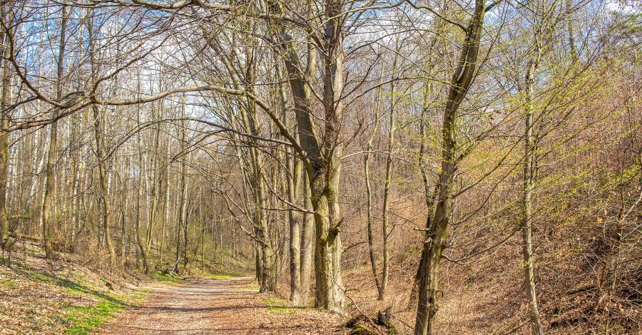 Park Krajobrazowy Góra Św. Anny - zdjęcie