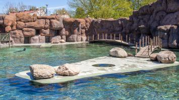 Zoo, akwaria i zwierzyńce - zdjęcie