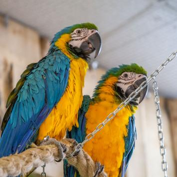 Papugarnia w Opolu