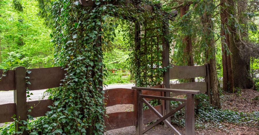 Arboretum w Lipnie - zdjęcie
