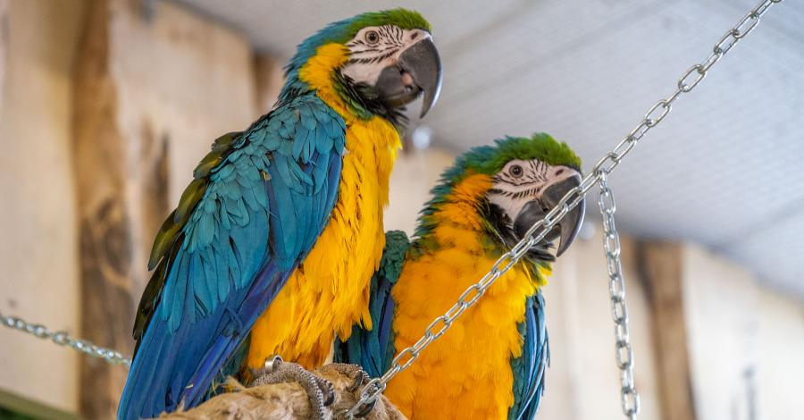 Papugarnia w Opolu - zdjęcie