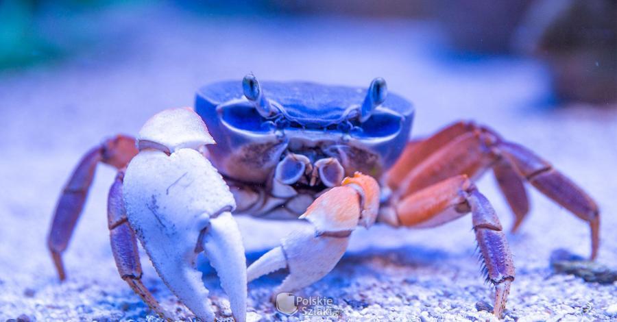 Oceanarium Międzyzdroje - zdjęcie