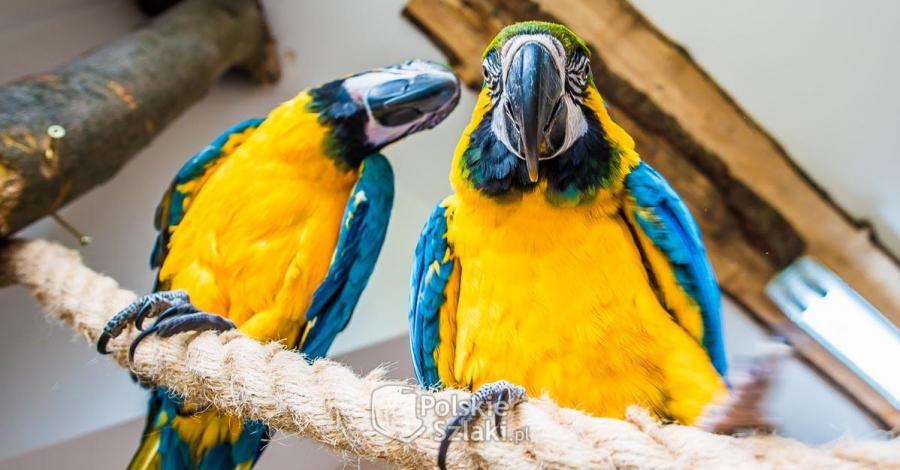 Papugarnia Egzotyczne Zakopane - zdjęcie