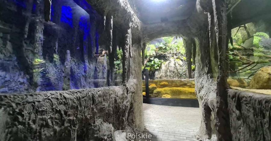 Podwodny Świat Zakopane - zdjęcie