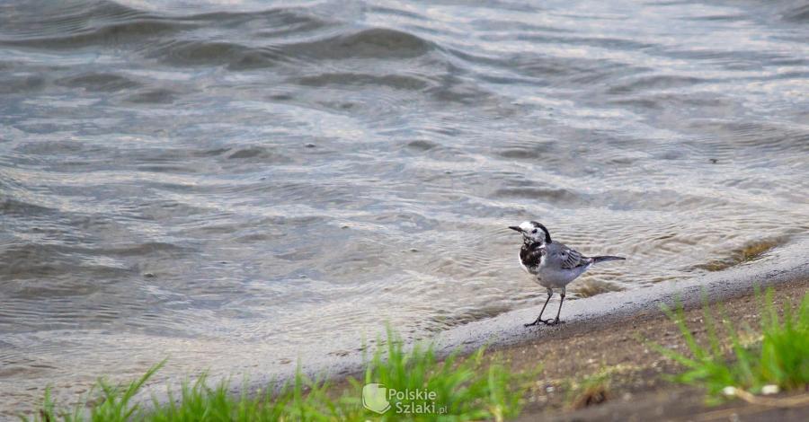Ptasia Wyspa na Zalewie Poraj - zdjęcie