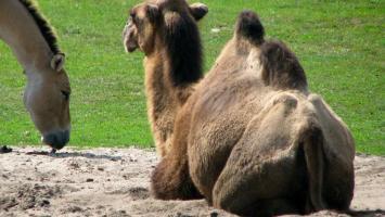 Zoo w Opolu, Moszna, Stare Tarnowice - zdjęcie