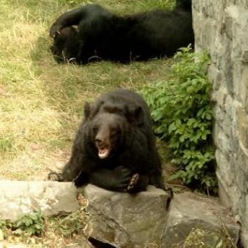 Zoo w Chorzowie - zdjęcie