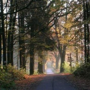 Górznieńsko - Lidzbarski Park Krajobrazowy