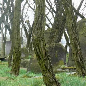 Cmentarz żydowski w Zduńskiej Woli  - zdjęcie