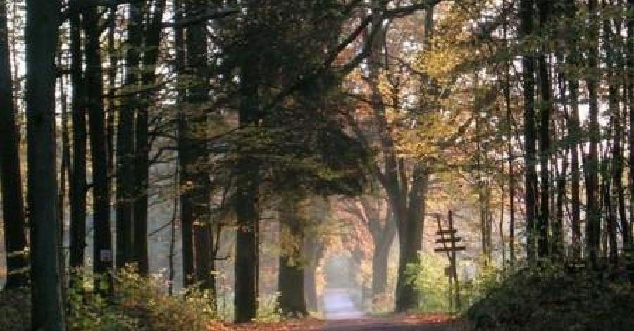 Górznieńsko - Lidzbarski Park Krajobrazowy - zdjęcie