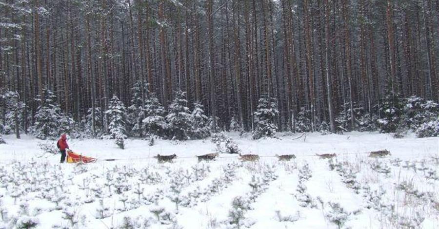Psimi zaprzegami po Borach Tucholskich-wspomnienia z zimy. - zdjęcie