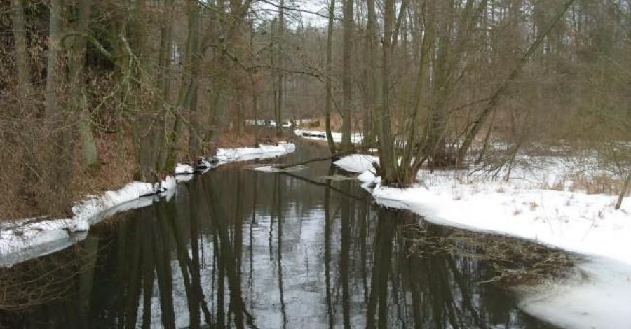 Bory Tucholskie zimą - zdjęcie