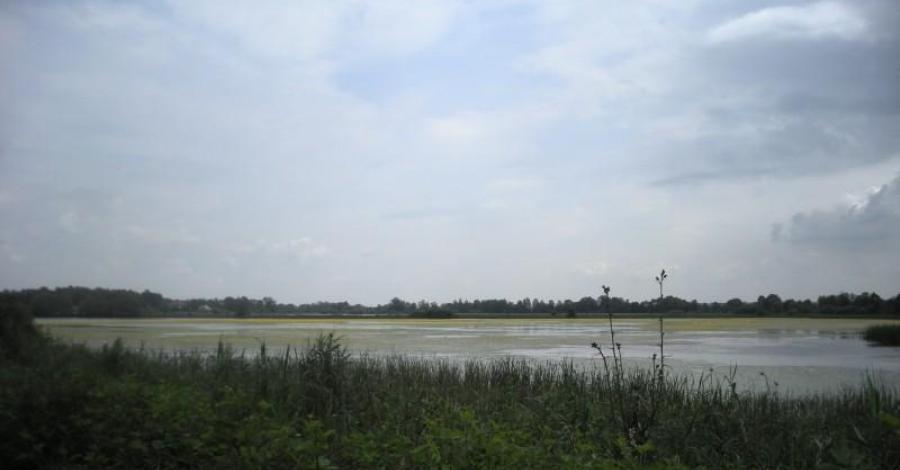 stawy rybne w Zatorze - zdjęcie