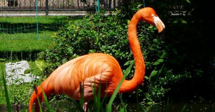 Wrocławskie Zoo - zdjęcie