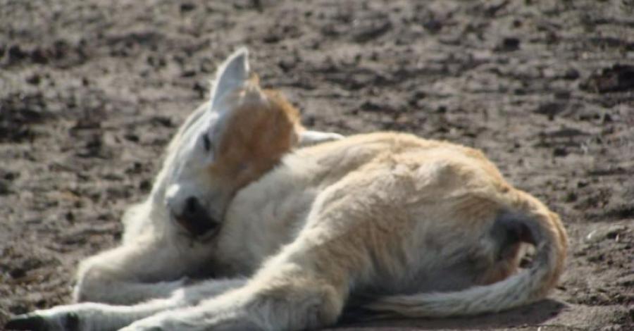Park Zoo Safari w Świerkocinie - zdjęcie