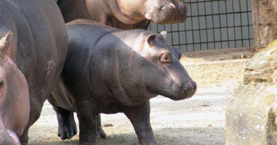 Ostrava Ogród Zoologiczny - zdjęcie