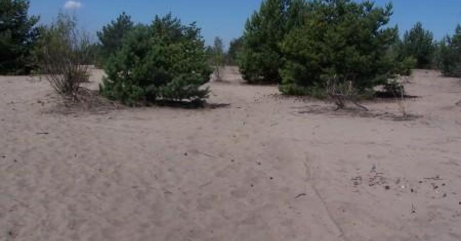 pustynia błędowska - zdjęcie