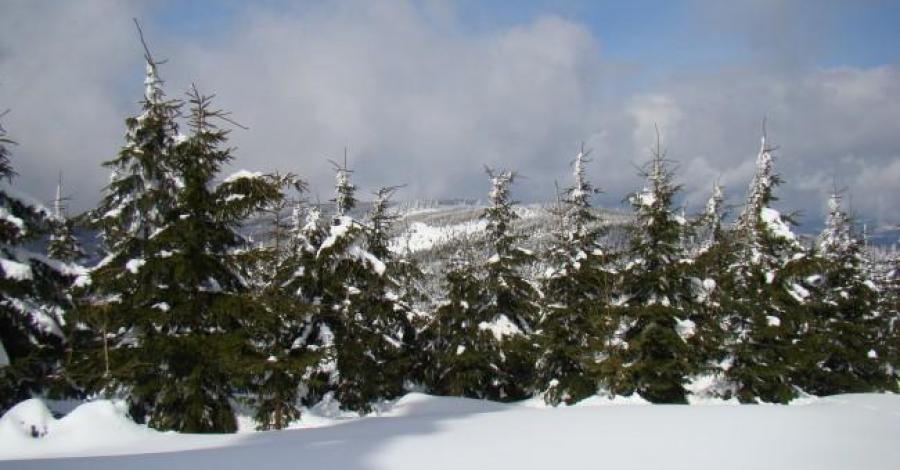 Na Śnieżnik Kłodzki Z Międzygórza - zdjęcie