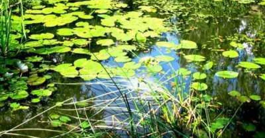 Uroczysko Piekiełko w Borach Tucholskich - zdjęcie