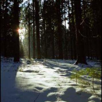Rezerwat Kulikówka