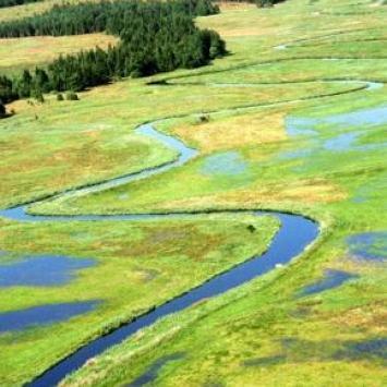 Rezerwat Nietupa w Krynkach