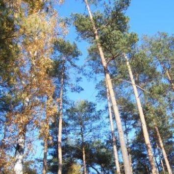 Leśna Ścieżka w Lesznie