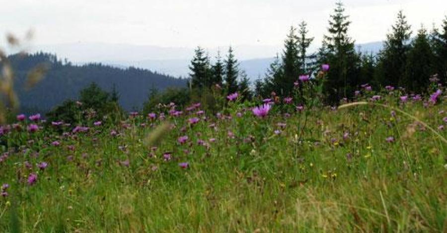 Rezerwat Barania Góra - zdjęcie