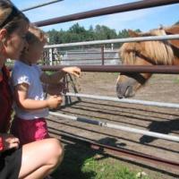 Mini Zoo w Świerklańcu