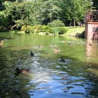 Park Pałacowy w Pszczynie