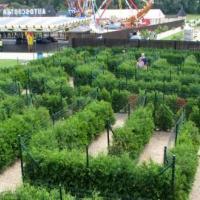 Zielony labirynt w Parku Miniatur