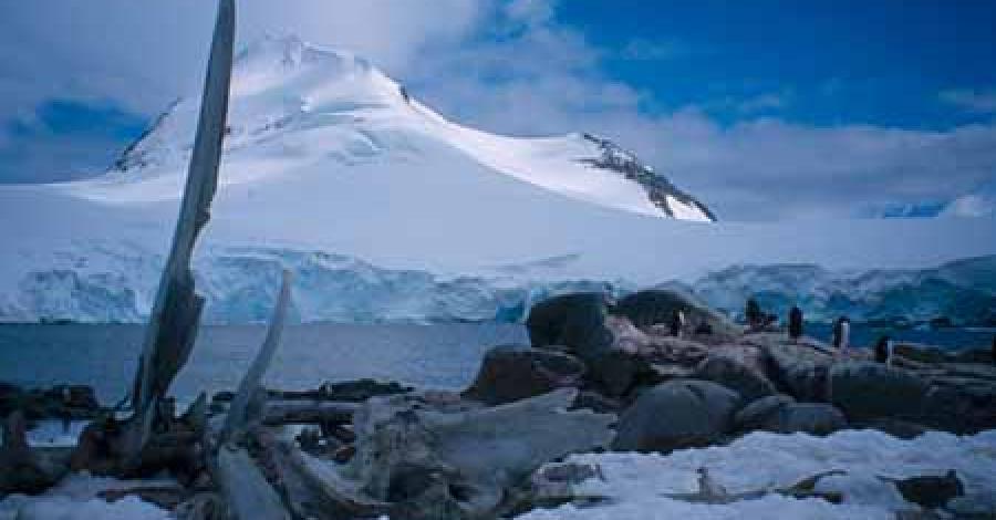 Antarktyka - zdjęcie