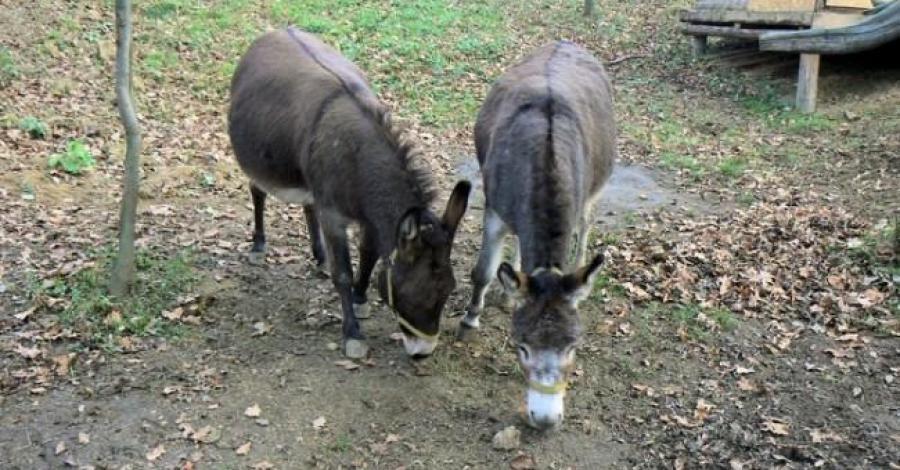 Mini Zoo w Inwałdzie - zdjęcie