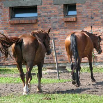 Ośrodek Jeździecki w Tarnowskich Górach