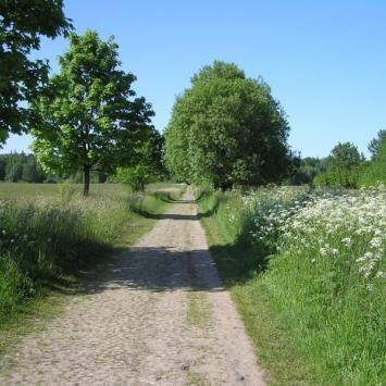 Obszar Ochrony Ścisłej w Puszczy Białowieskiej - zdjęcie